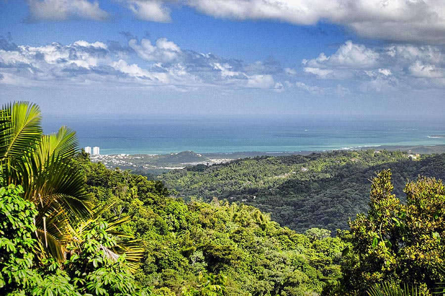 The view from El Yunque National Park in Puerto Rico. (Photo Courtesy: Trish Hartmann via Flickr)