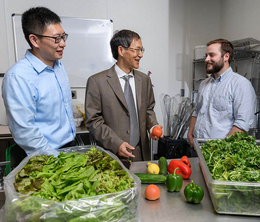 Postdoctoral fellow Bopeng Zhang, left, Professor Yongshen Chen and graduate research assistant Thomas Igou will pilot a project to use wastewater nutrients to grow lettuce, tomatoes and other fruits and vegetables.